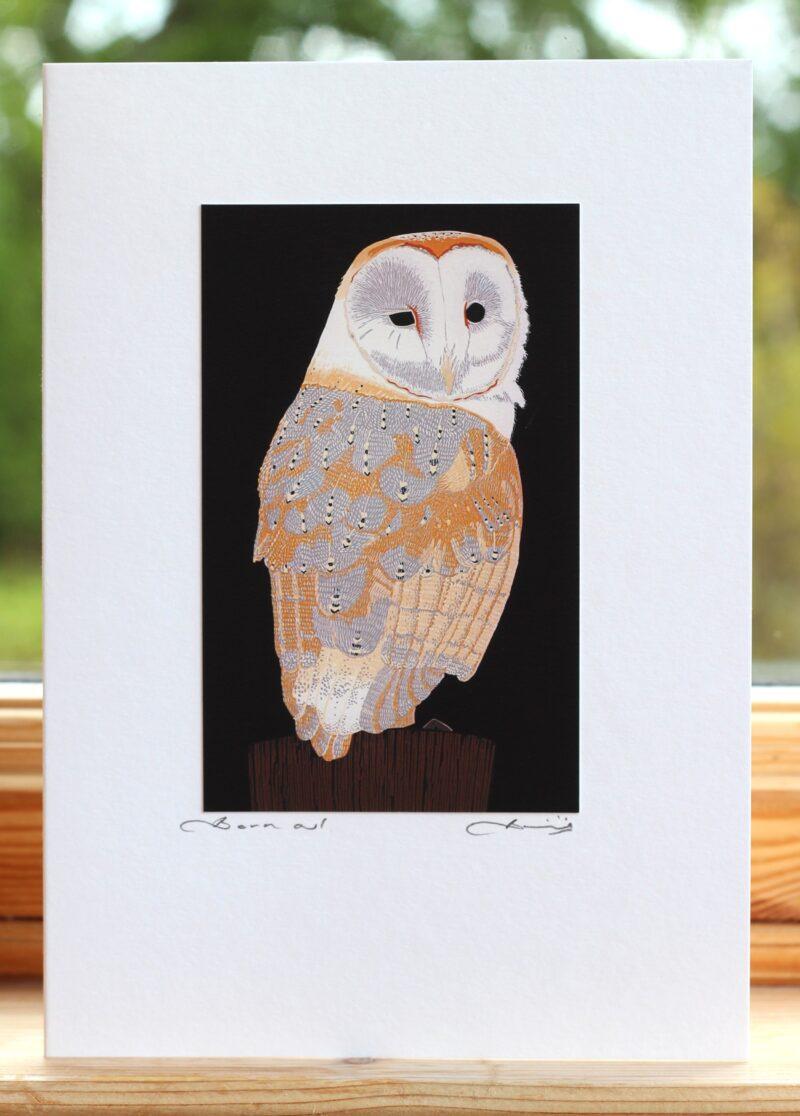BIRD Barn Owl 04 LIGHT