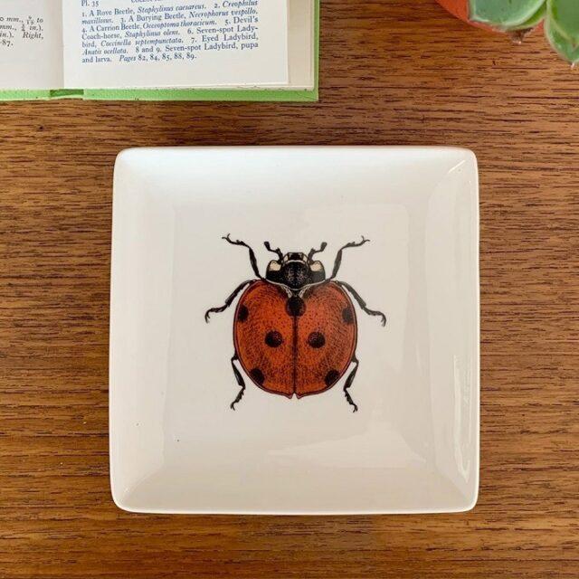 ladybug trinket tray