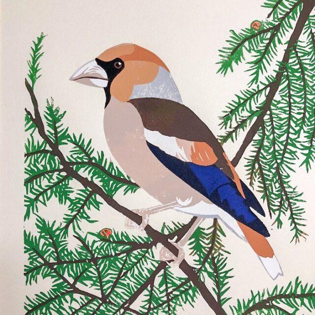 hawfinch linocut print