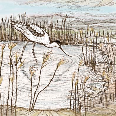 Avocet Print by Fay's Studio