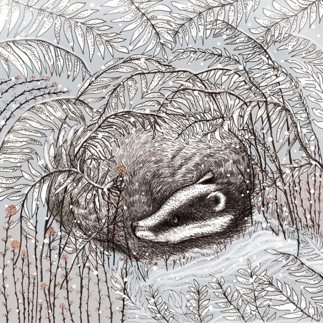 badger greetings card by fays studio shows a badger curled up in grasses
