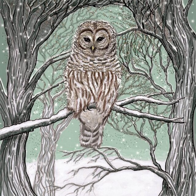 barred owl greetings card by fay's studio showing brown owl with barred front on a branch with trees against a green background