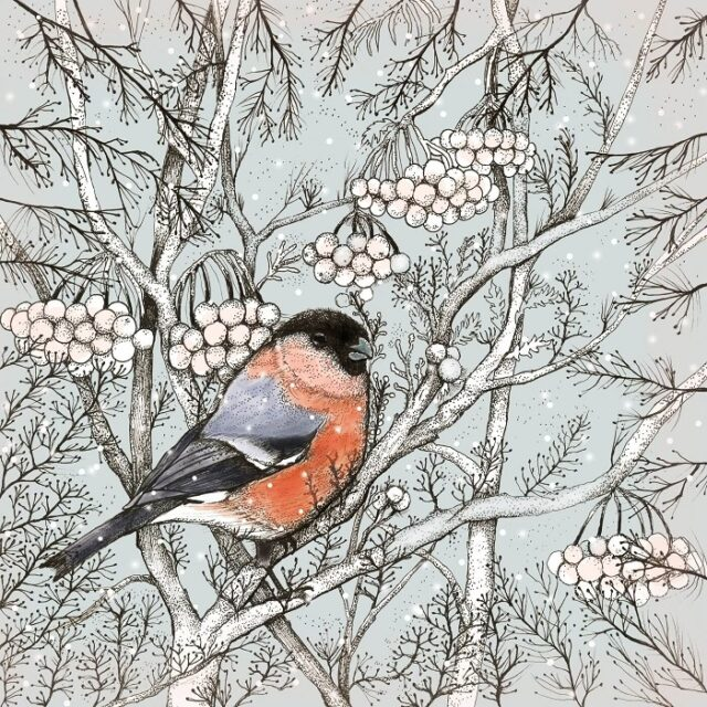 bullfinch greetings card by fay's studio showing male bullfinch with red front against dark leaves and white berries