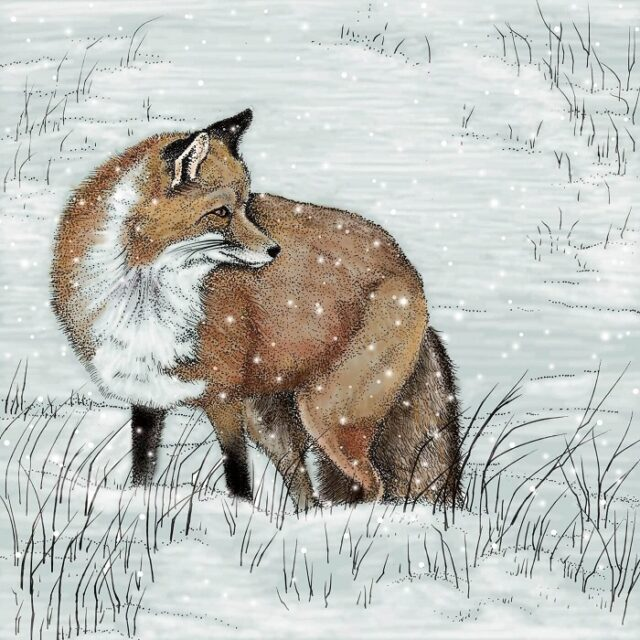 fox greetings card by fay's studio showing fox in foreground facing to right against a snowy field