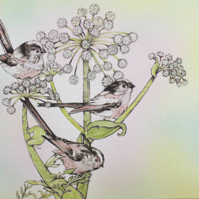 long tailed tits and angelica print shows birds sitting on the herb against a pale green background