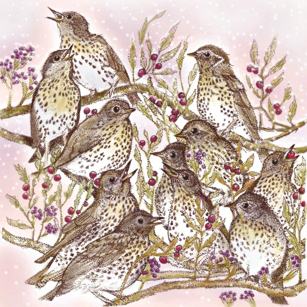 song thrush greetings card by fay's studio showing ten thrushes nestled together in a bush with berries