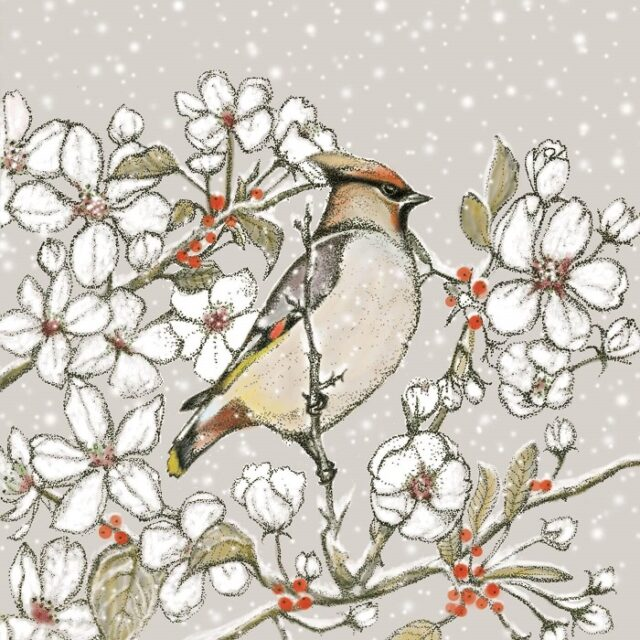 waxwing greetings card by fay's studio shows a waxwing facing right against blossom