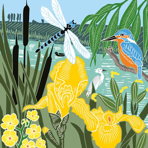 kingfisher and dragonfly with yellow flag iris and stream