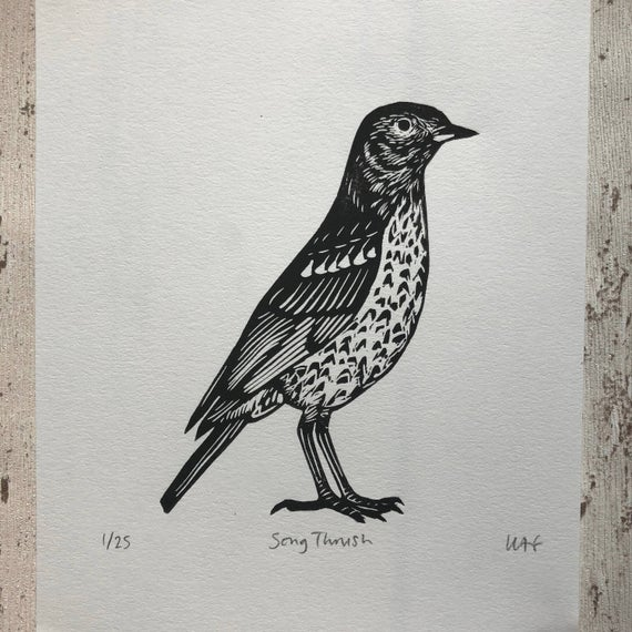 Songthrush linocut print shows bird in black on white background facing right